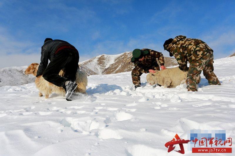 冬天雪地的动物和小孩图片