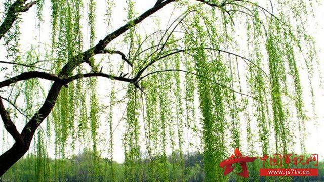 河和柳树简笔画