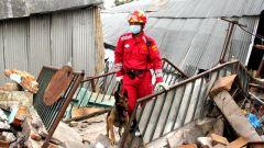 【精武好身手】高級搜救犬廢墟中快速搜索幸存者