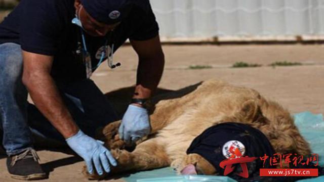 伊军解放摩苏尔动物园 发现仅存两只动物