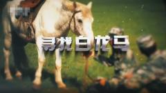 20171105《军迷淘天下》寻找白龙马