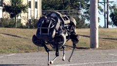 """机器人巨星""""大狗""""为何被关禁闭"""