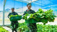 """海拔4300米,武警官兵在""""生命禁区""""种出绿色蔬菜"""
