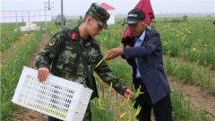 军民一家亲 武警官兵冒雨助农民抢收黄花