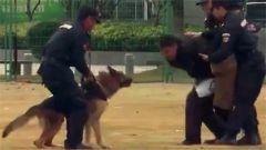 零距离感受特战神犬的训练和成长