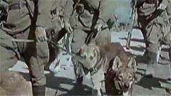 为了阻止德军,苏联竟用狗充当敢死队
