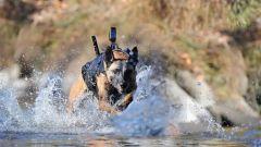 战争中的军犬,请给他们敬礼!
