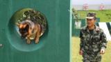 训导员韩孟林与警犬训练中