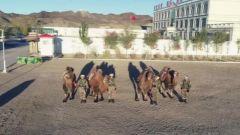 《军事报道》20181029愿做扎根边防的大漠胡杨