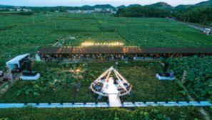 国博40周年成果展之壮美篇章:希望的田野