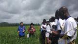 """深入实施农业""""走出去""""战略,扩大农业国际合作事业,形成了全方位、多层次、宽领域的农业对外开放新格局。图为2018 年科特迪瓦水稻技术海外培训班上中国专家向学员介绍水稻品种。"""