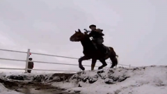 軍馬與軍犬在訓練上的區別有多大