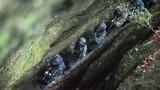 特战队员继续通过狭窄的山间小路
