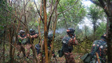 特战队员进行丛林搜索。