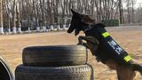 """警犬""""心情""""进行搜索目标物训练。"""