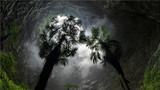 这是2018年5月17日在湖北省恩施土家族苗族自治州宣恩县锣圈岩村天坑底部拍摄的植物。新华社发(宋文 摄)