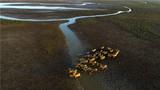 这是在江苏大丰麋鹿国家级自然保护区拍摄的麋鹿群(2018年10月4日无人机拍摄)。新华社发(贺敬华 摄)