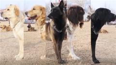 【新春走基层 记者在战位】走进中国国际救援队搜救犬的春节生活
