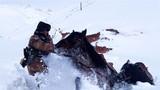 军马陷入雪窝后,官兵正在全力解救。