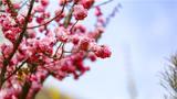 十里桃花,万里春光。