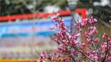 春色满园藏不住。