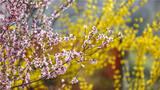 春风吹过,暖开了花朵,惊艳了时光。