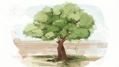 生為合抱樹 長情才長青