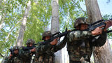 官兵们正在进行战术训练。