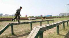 武警某部:警犬亮相比武场