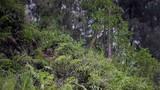 特戰隊員利用野外陡峭山崖進行攀登訓練。