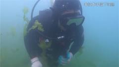 """蛙人版""""海底捞针""""来了 水下搜索训练难住了经验丰富的老兵"""