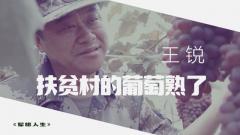 《军旅人生》 20190723 王锐:扶贫村的葡萄熟了