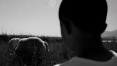 放羊少年助解放军过雷场 主动参战与敌肉搏