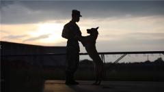 """警犬""""飛羽""""養成記:人犬情深形影不離 是師徒更是戰友"""