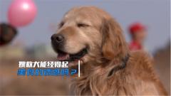 美食當前誘惑滿滿 搜救犬能否抵抗干擾順利完成比賽?