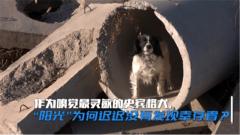 它們是最強生命探測儀 來看搜救犬如何找到廢墟下的被困者