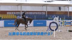 探秘军运会:马术项目的马匹有何讲究?