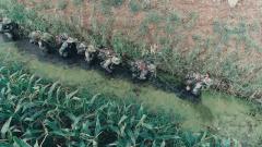 崩潰!特戰小隊臭水溝內行進 邊走邊往臉上涂抹淤泥