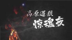 《軍事紀實》今日播出《高原遇狼驚魂夜》