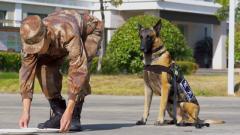 当军犬遭遇美食诱惑 它们会……...