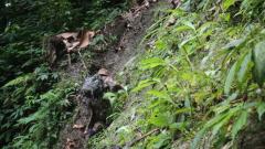 【第一軍視】直擊墨脫巡邏路:峰險谷深 蛇蟲肆虐 步步驚險
