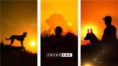 """【軍視界】""""救援特種兵""""搜救犬:它們付出一生 只為保我們的平安"""