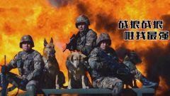 《誰是終極英雄》20191222《那些無言的戰友們》之《我的戰犬我的兵》