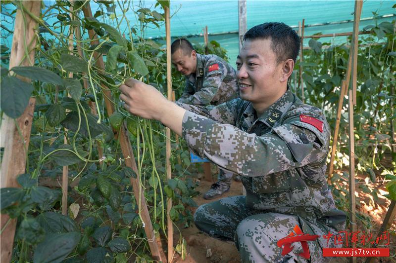 """03-官兵们在""""八一菜园""""采摘制作饺子馅的蔬菜"""