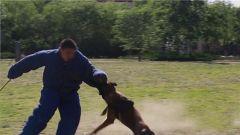 一身撲咬傷是他最美的勛章!致敬軍犬助訓員!