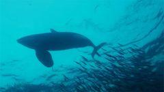 潜入深海 跟鲸鱼学抗压