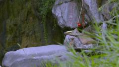 姜太公钓鱼:一场惊人的韬略