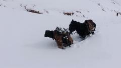 用身躯蹚出通道 一人一马风雪巡逻路