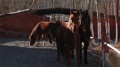 生性自由的马匹 如何做到对战士口令令行禁止?