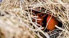 一枪命中!陆军第78集团军某合成旅组织狙击手集训